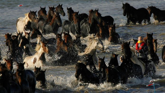 100 ló várja halálát a szigeten. Ám 7 nő fogja magát, és hihetetlen dolgot művel: